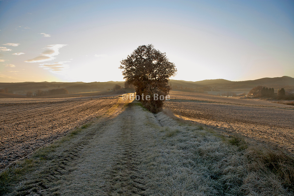 sunrise in rural landscape setting with frosted grass