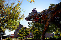 Copper Wolf on Central Campus in the fall.