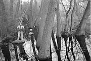 """Ekensbergs """"Amazonas"""", Mörtvikens inre"""
