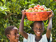 Some of David and Joyce's children with freshly picked tomatoes. Their farm has grown from nothing, in the days when they could only afford one meal a day. Thanks to the training provided by Send a Cow, they are now able to feed their family of 16 children and their farm is fast becoming a profitable business. Their eldest son Ouran James has just completed a dipolma in Agriculture.