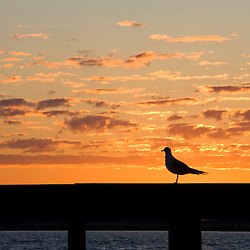 Seagull at sunrise on a pier in the Connecticut River in Old Saybrook, Connecticut.