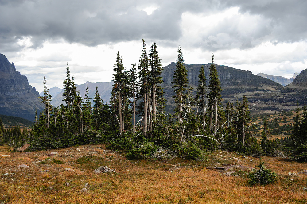 A view from the valley below the base of Mount Clements at Logan Pass, Glacier National Park, Montana, Tuesday, October 7, 2014. According to Dan Fagre Ph.D. of the USGS clumps of sub-alpine fir have gotten thicker and taller in this area due to warming temperatures and changes in snow melt.