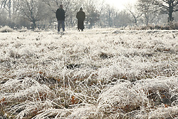 © Licensed to London News Pictures. 31/01/2019. London, UK. Frost clungs to frozen grass in Richmond Park after a night of below zero temperatures. More snow is expected in the south overnight tonight. Photo credit: Peter Macdiarmid/LNP