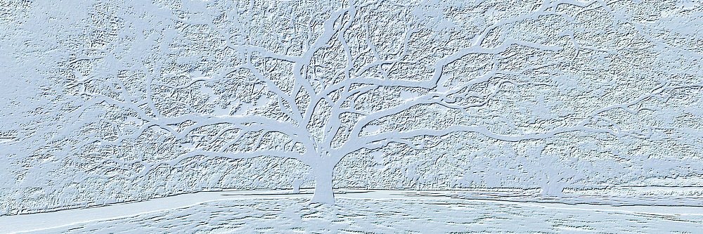 Monkeypod tree design relief simulation
