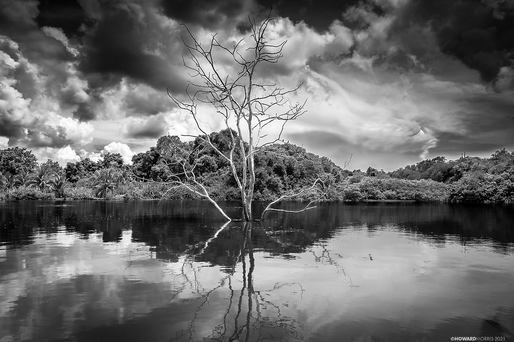 An isolated tree stands in the flooded waters of the Darien Province, Panama.