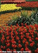 Tulips, Longwood Gardens, Kennett Square, Chester Co., PA