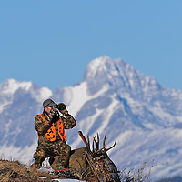 Mule deer hunter backpacking big trophy antlers, binoculars looking though