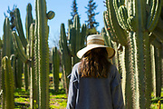 Tourist enjoying taking a stoll around Cactus Thiemann - one of the largest cactus farms in Africa, Marrakech, Morocco, 2018–02-27.