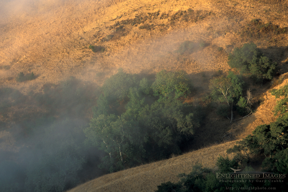 Coastal fog and golden grass hillside at sunrise, in the rural countryside near Cambria, San Luis Obispo County, California