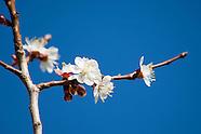 20070323 Spring
