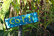 Berkeley, California, June, 2008-A sign hand painted by children labeling a corn patch at the Edible Schoolyard. The organic garden was founded by Alice Waters of Chez Panisse to involve students in all aspects of farming.