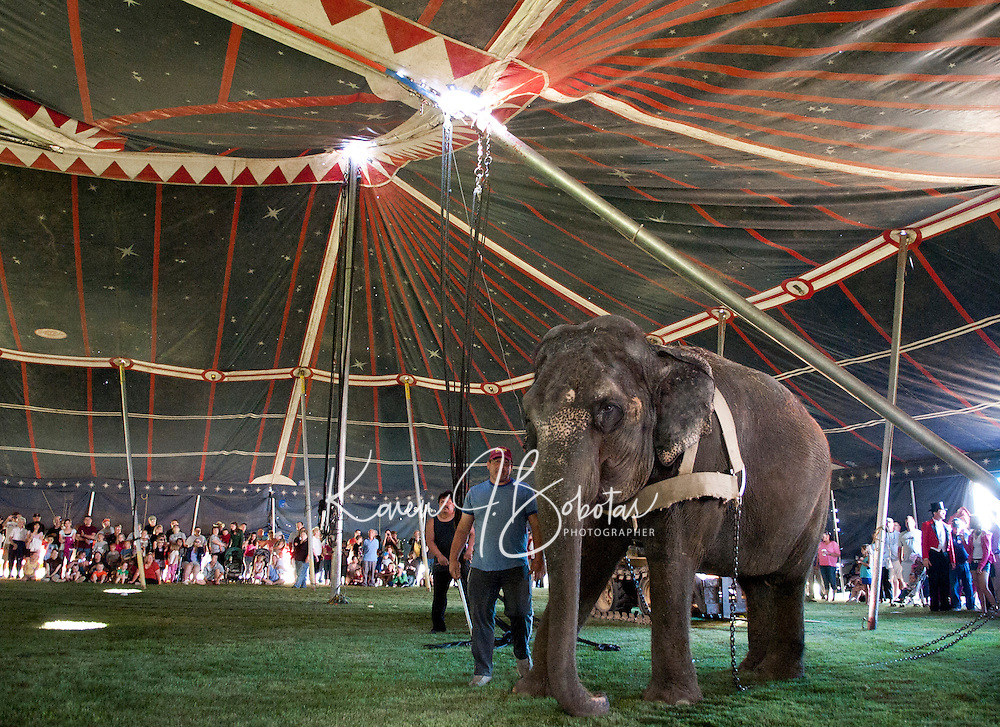 "Armando Loyal leads ""Lisa"" the elephant into the big top to raise the poles Friday morning at Memorial Park in Laconia.  (Karen Bobotas/for the Laconia Daily Sun)"