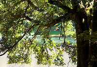 Chateau de Sauvage, France. Stream seen through the hanging branches of an oak tree.