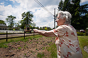 Cecilia Colegi of Dalton Gardens points out the evergreen trees in her front yard that were taken out due to the new street construction on the 1200 Block of Hanley Avenue on Thursday.