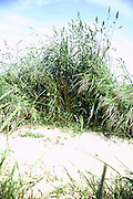 bundle of wild grass on the roadside of a dirt path