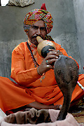 Sheesha Nath plays his snake charming pipe known as a Bean as a large black cobra rises up in front of him in the Indian state of Uttar Pradesh..56 yr old Sheesha comes from a family of charmers that have been in the business for as long as anyone can remember. .He says of charming, 'the future does not look good for charmers, its just not sustainable these days. The situation has become so bad that charmers cannot even afford to send their children to school'...