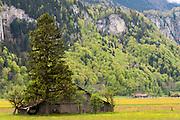 Scheune, Baum, Felsen, Berge, Berner Oberland, Schweiz, Berner Oberland, Switzerland | Barn, tree, rock, mountains, Bernese Oberland, Switzerland, Bernese Oberland, Switzerland