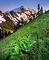 Hidden Lake Peak and grassy meadows with corn lily, North Cascades National Park Washington USA
