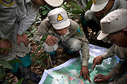 Rangers check their position in a forest on a map. The forest rangers are employed by the Ministry of Environment but sponsored by Flora and Fauna International who pays them 75% of their salary and provides training and accommodation. They undertake regular patrols in to the Samkos Wildlife Sancturary which is part of the Cardamom Mountains Nature Reserve looking for illegal activites such as logging, poaching, land encroachment and the production of the illegal substance sassafras oil. The Cardamom Mountains and surrounding forests is the largest and most pristine area of intact forest in SE Asia. Covering an area of 2.5 million acres it became one of the last strong holds of a retreating Khmer Rouge. Their presence helped preserve the forest as no-one dared to venture inside. But with the Khmer Rouge gone, it faces new dangers from poachers, loggers and illegal drug factories. In charge of protecting this vast forest are a handful of rangers who's job it is to track down and arrest those who are helping to destroy this delicate habitat.