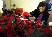 © Licensed to London News Pictures. 07/11/2011. Richmond, UK. Iris Kellett from Barnes, London, has worked at the factory for almost 29 years. Red Poppies being made in The Poppy Factory in preparation for sale in 2012, Richmond, Surrey today 7th November.  The factory has been supplying the poppy, crosses and wreathes to the British Legion for almost 90 years. It is staffed by veterans, many whom of which are injured, sick or wounded of all ages. Photo credit : Stephen Simpson/LNP