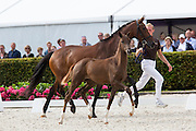 Luxury<br /> Excellent Dressage Sales<br /> Longines FEI/WBFSH World Breeding Dressage Championships for Young Horses 2016<br /> © DigiShots