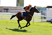 TELECASTER (6) ridden by Oisin Murphy and trained by Hughie Morrison goes to post before winning The Group 2 Al Basti Equiworld Dubai Dante Stakes over 1m 2f (£165,000) during the second day of the Dante Festival at York Racecourse, York, United Kingdom on 16 May 2019.