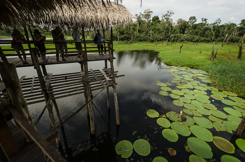 Water-lili (Victoria amazonica), known in the region as vitória régia.