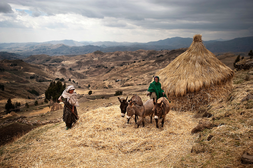 In the mountainous village of Addei, 3500 meters above sea level, Zinet loosens the sheaves with a pitchfork while her father Yesuf guides the donkeys in an agricultural tradition that hasn't changed for centuries.<br /> <br /> Ethiopia 2010