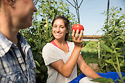 A student shows researcher Julie Dawson an organic tomato at the Universities research farm.