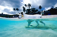 A samoan dog patrols the beach in Western Samoa.