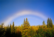 Fogbow (white rainbow) over boreal forest<br /> Clear Creek<br /> Yukon<br /> Canada