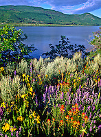 A colorful array of  paintbrush, lupine and mule-ears adds a splash of color to the lush valley at Vega State Park.  Colorado.