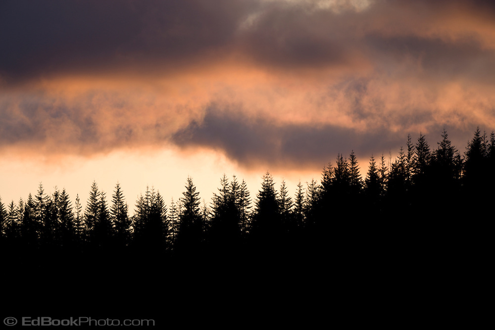 A line of conifers is silhoutted against clearing storm clouds.