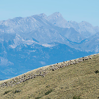 hunting is the swiss and french alps, europe,