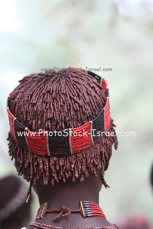 Africa, Ethiopia, Omo River Valley Hamer Tribe young female member with Ochre in her hair
