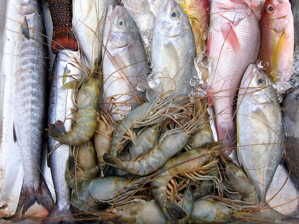 The daily catch of fish on display outside a café on Mirissa Beach, in southern Sri Lanka