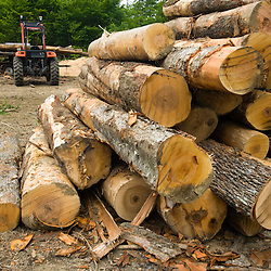 Hardwood logs in a log yard in a forest in Eden, Vermont.  Green Mountains.