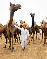 A male camel herder stands in the desert at Pushkar Fair with his camels. He sports as moustache, an orange turban and and long stick.