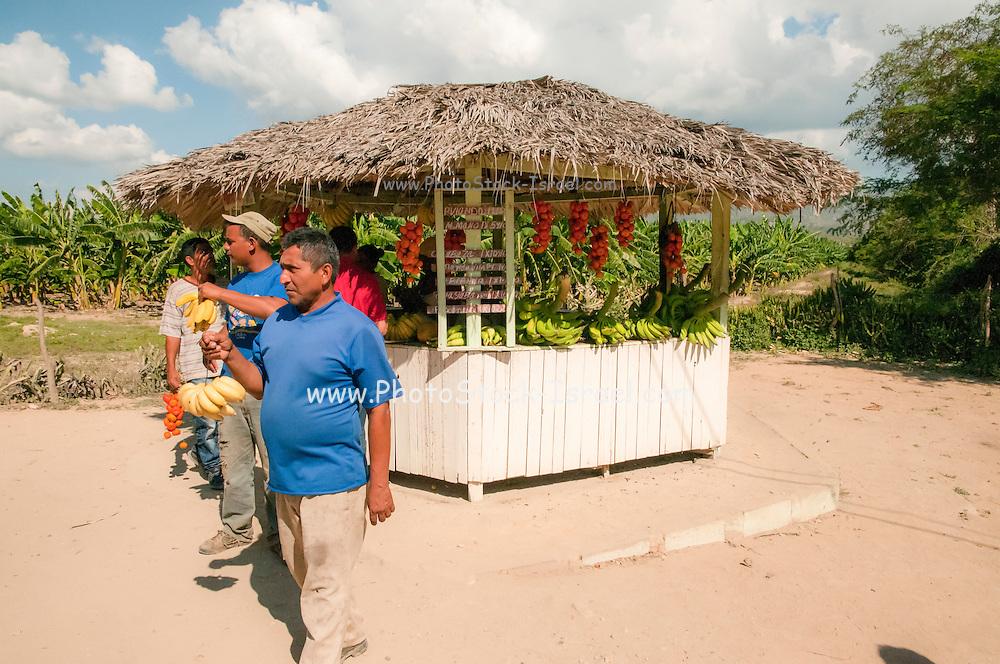 Fruit stall near Baracoa, Cuba