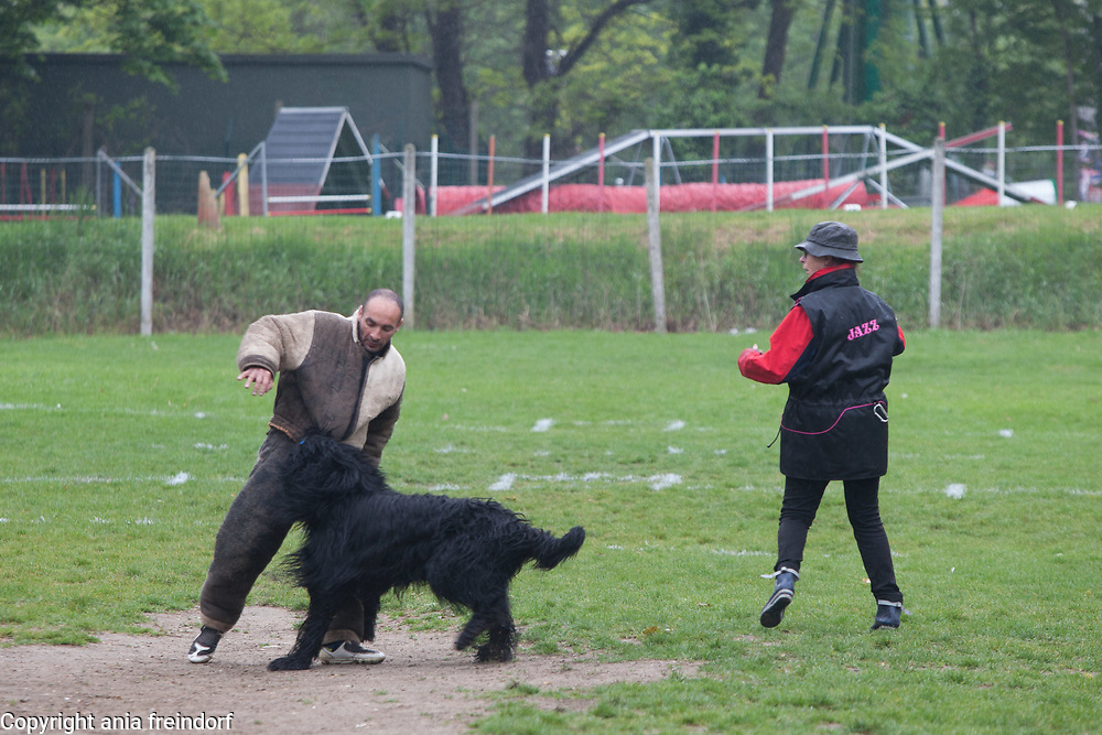 Ring Sport Canin, Concours at Argenteuil Club Canin, France