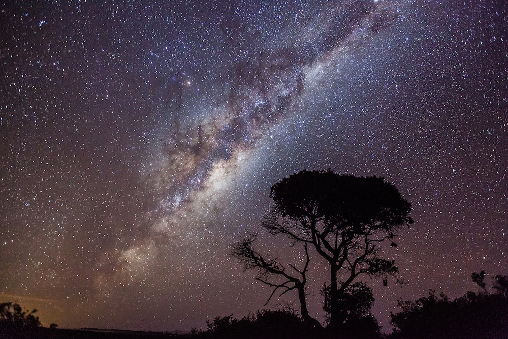 The Milky Way and a lone African Acacia tree, De Hoop Nature Reserve, Eastern Cape, South Africa.