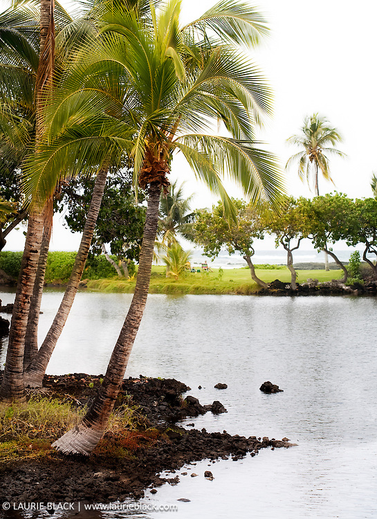 Palm in lagoon