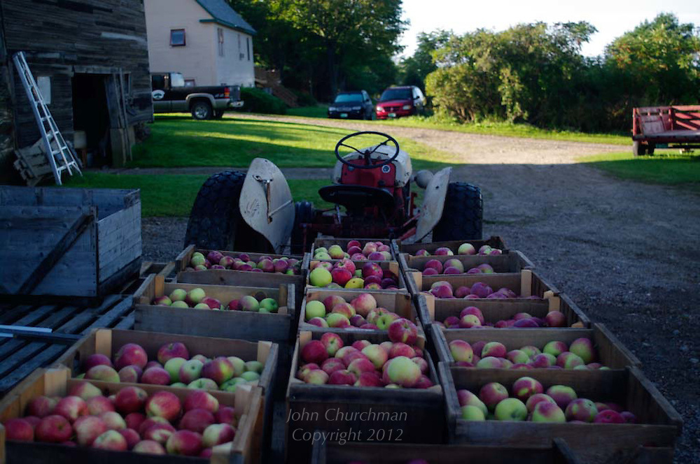 Apples collected by tractor, Chapin Orchard, Essex, Vermont for cider making