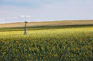 http://Duncan.co/broken-windmill-in-sunflower-field
