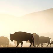 46 - Theodore Roosevelt National park
