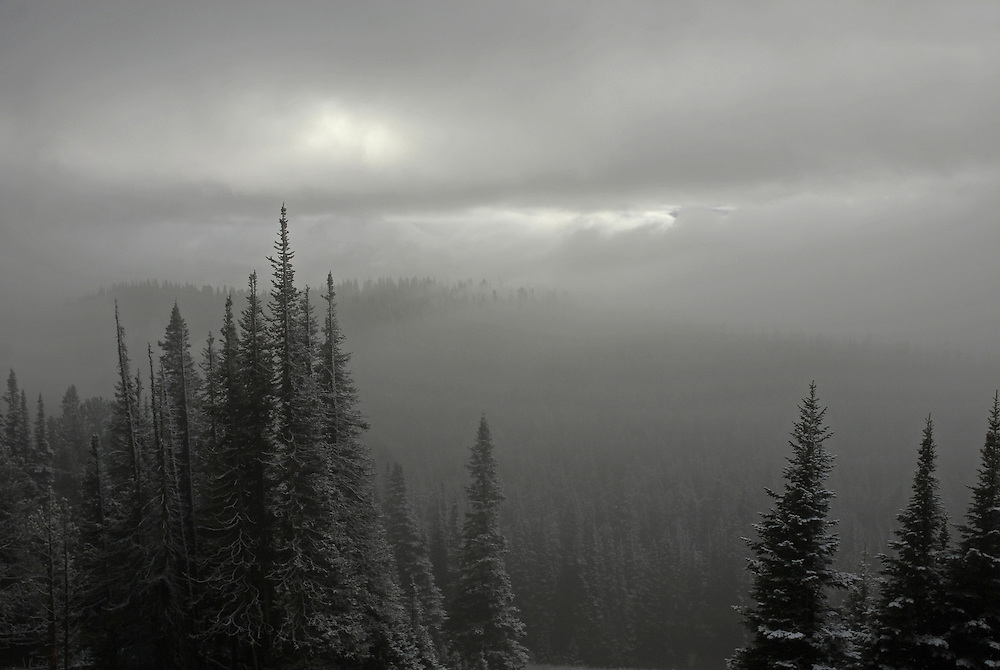 An early season snowstorm darkens the afternoon sky over Dunraven Pass in Yellowstone National Park.<br />