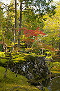 A moss covered cliff and orange Acer leaves over a pond at the Saiho-ji Garden (Temple of Moss) Kyoto,  Japan
