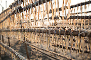 Fish hang on long racks to dry them in the sun. This area is famous for its dried fish.