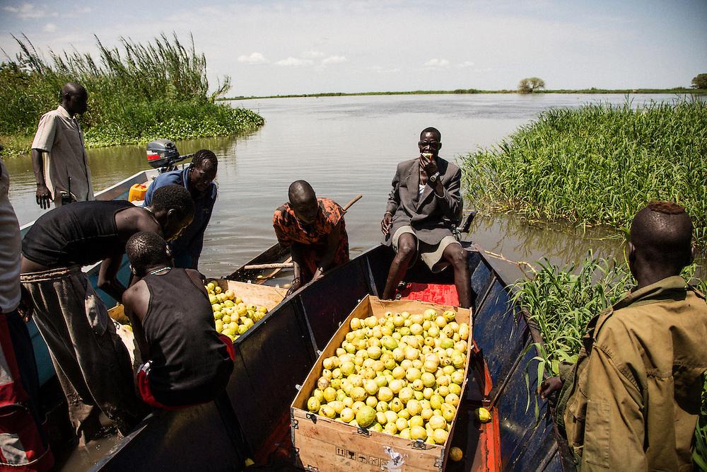 A Nile River fishing camp in Terekeka, South Sudan. Offloading guavas.