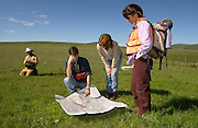 (from left to right) Robert Taylor, Phil Shephard, Catherine Parks, and Susan Geer study a map before surveying The Nature Conservancy's Zumwalt Prairie Preserve for non-native and invasive weeds. Keeping foreign plants out, and native plants in, is a Conservancy priority for managing the rare grassland. (Fully released)
